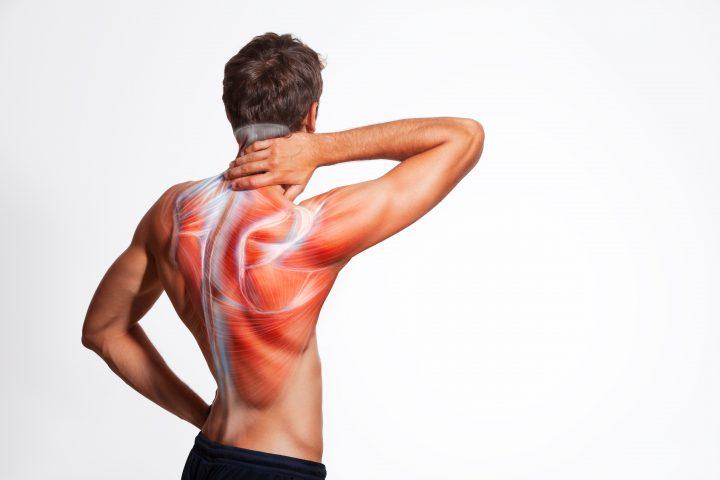 Oznaczenie mięśni na ciele mężczyzny